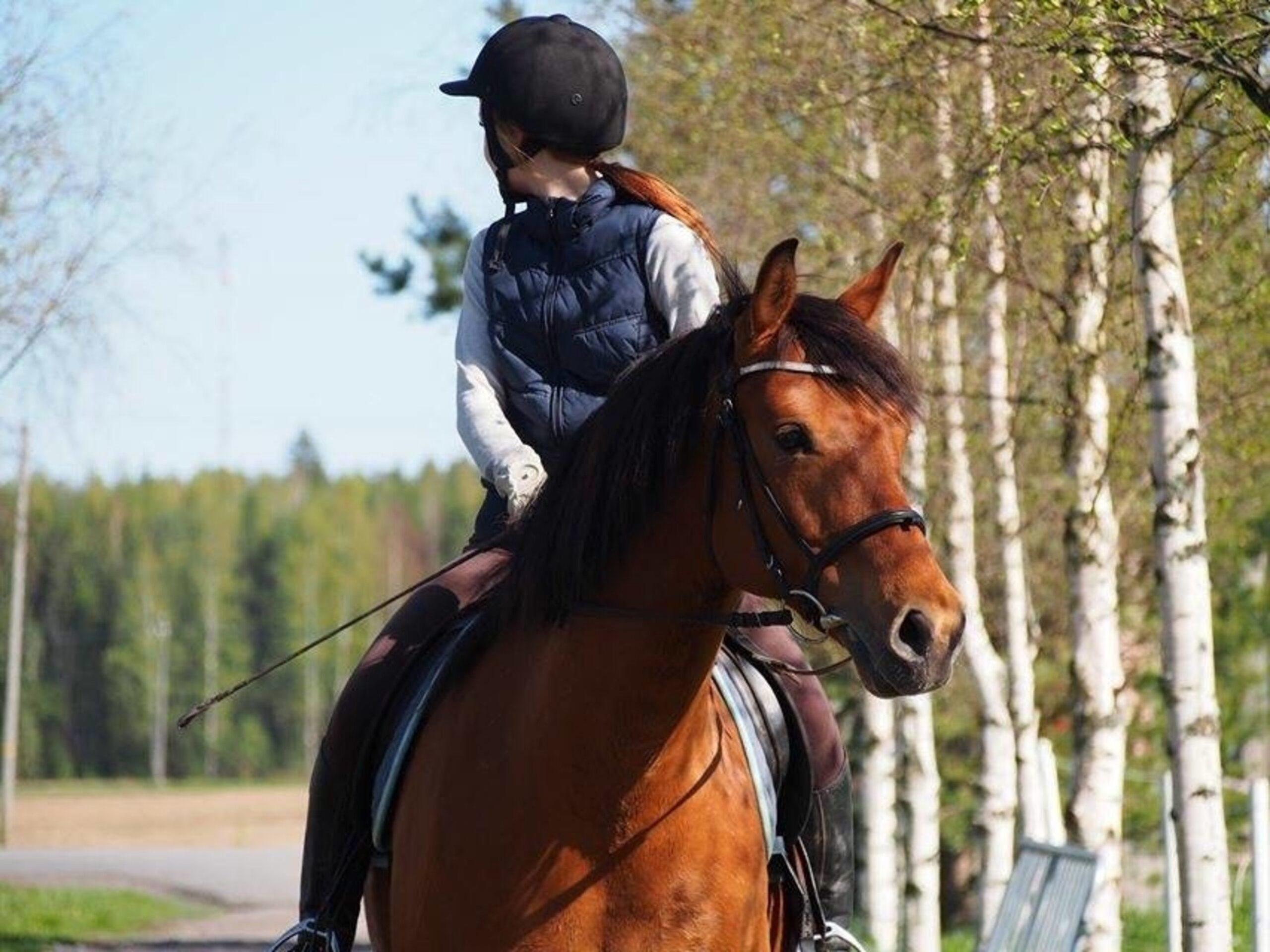 equitazione emorroidi